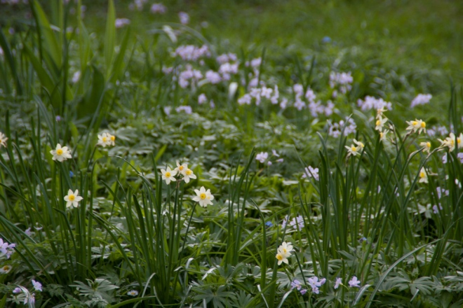 20110422_Pflanzen_Walnussbaum_April11_003